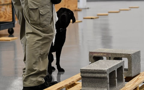 Lulu the bomb-sniffing dog gets fired by Central Intelligence Agency